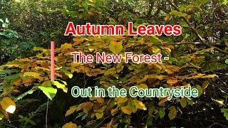 Autumn Leaves in The New Forest