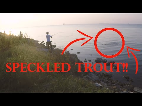 EVERYONE WAS CATCHING SPECKLED TROUT!!/Bank Fishing.