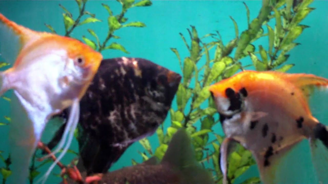 Overgrown tropical fish youtube for Jan s tropical fish