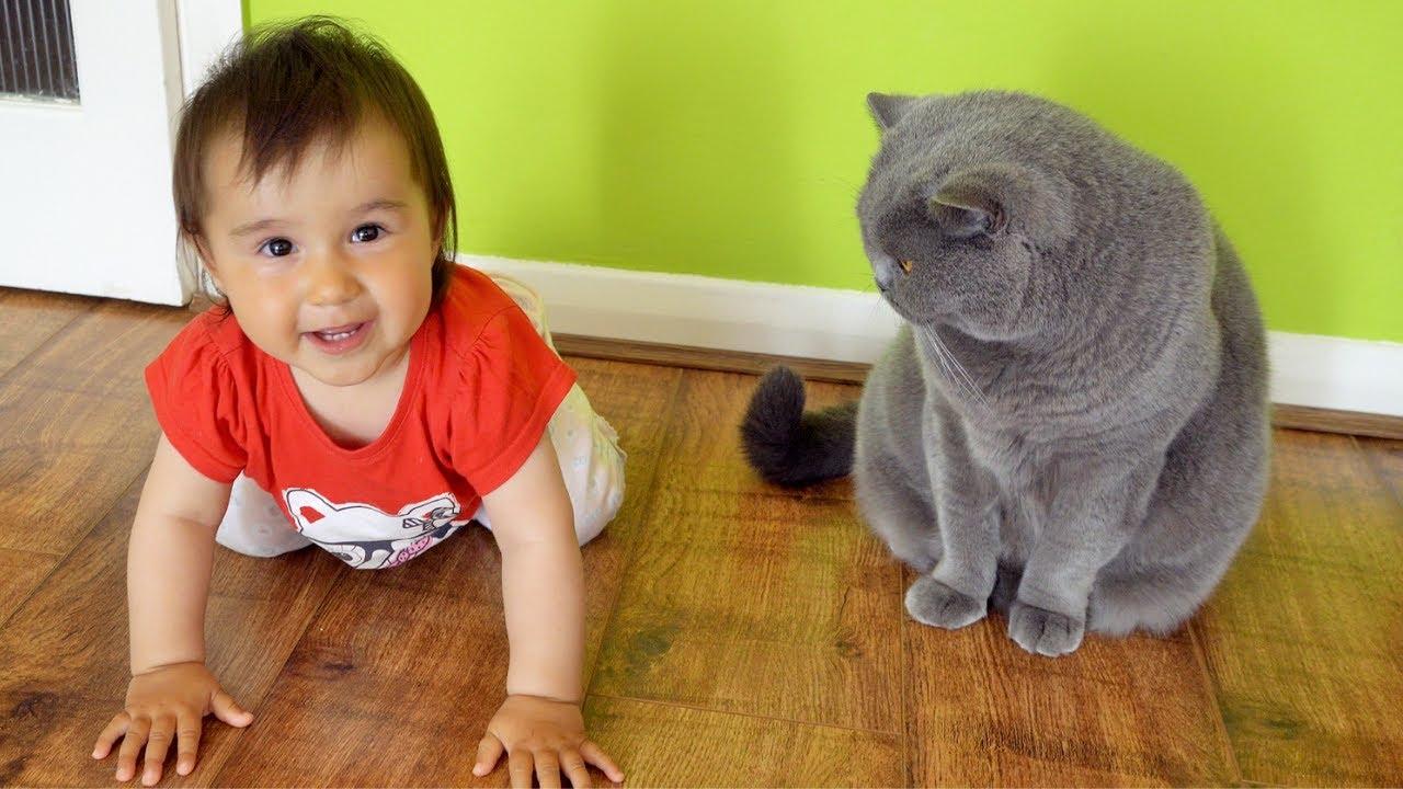 Baby Annoys Cat