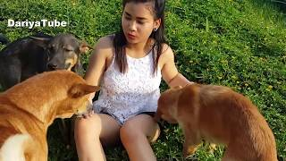 Fantastic Beautiful Girl Give Food and Play with Funny Dogs At Rice Field