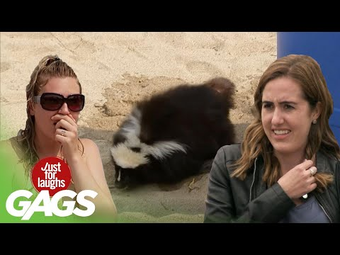 Skunk on the Loose, Peeing Statues and MORE!   Just for Laughs Compilation