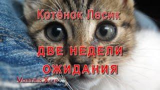 Котенок Лесик Две Недели Ожидания