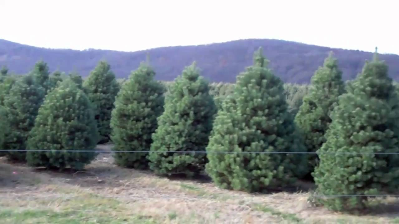 10,000 Christmas Trees in NJ - Evergreen Valley Christmas Tree Farm ...