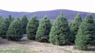 10,000 Christmas Trees in NJ - Evergreen Valley Christmas Tree Farm Tour