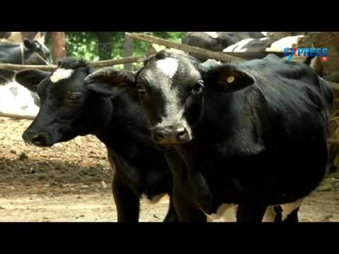 Success story of a Dairyman in Dairy Farming at Ranga Reddy