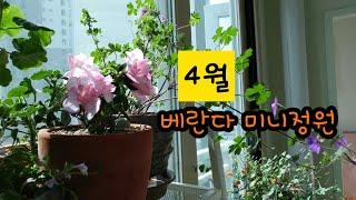 4월 베란다정원/2020.4.2