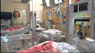 Premature Babies Helped With Pea Pod