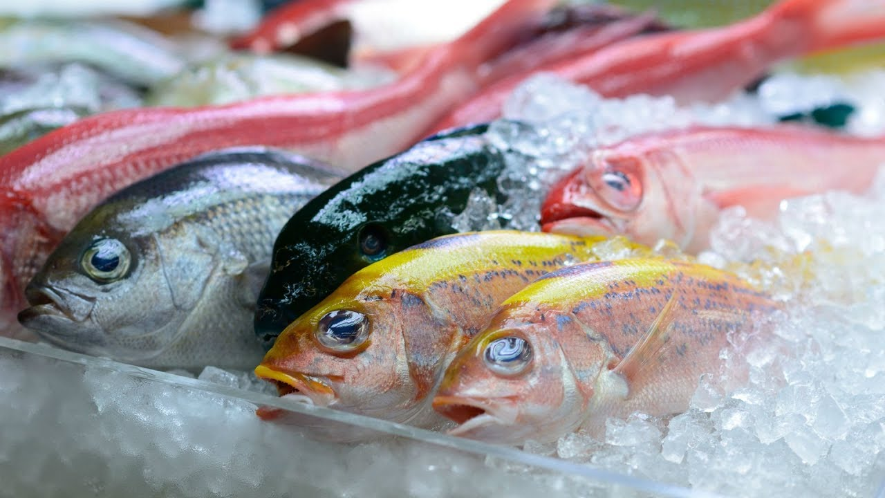 Image result for fresh fish