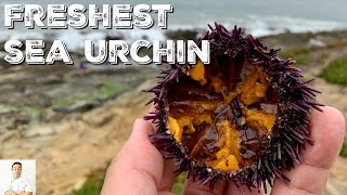 Foraging For The Freshest Sea Urchin In The World