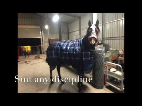 Dolly Stock Horse Mare For Sale NSW
