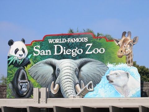 Traveling United States | San Diego Zoo | Zoo Animals in Old Town San Diego California
