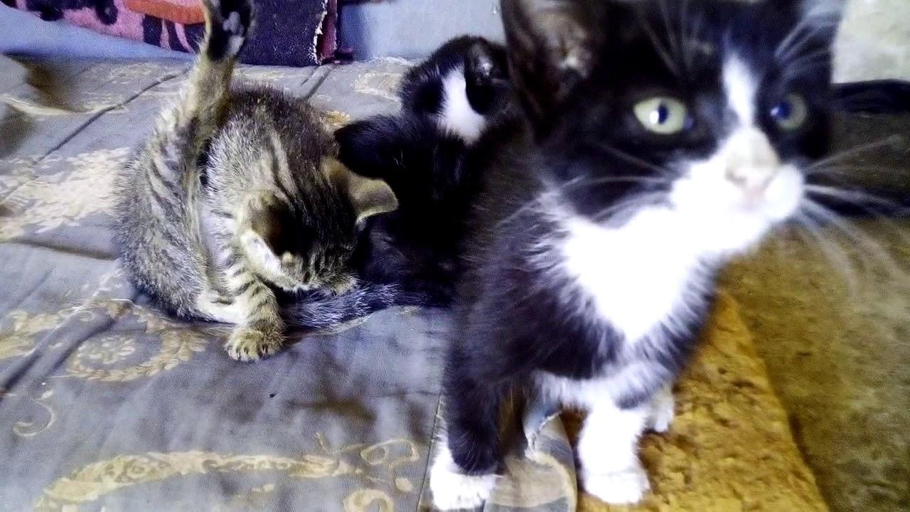 My best Cats Chaha Minocha Mira and Mimicha قططي الجميلة قمة الجمال واللطف والحنان