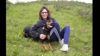 A Tribute To Our Doberman Pinscher Who Has Gone To Rainbow Bridge