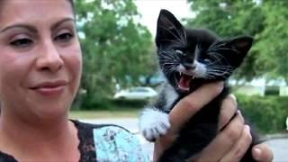 В разгар дня кто то выбросил котенка на дорогу , но два мужчины успели спасти его из под колёс