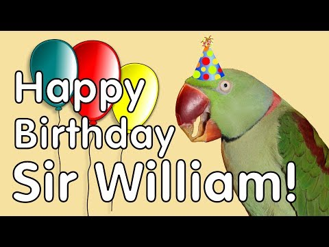 Parrot's 21st Birthday! Sir William Opens Gifts!