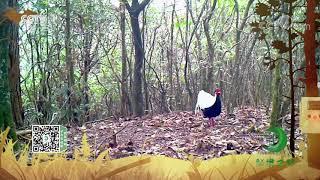 《秘境之眼》 白鹇/小麂 20201117| CCTV - YouTube