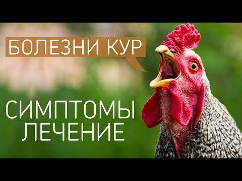 САМЫЕ ЧАСТЫЕ БОЛЕЗНИ У КУР: симптомы и лечение куриных заболеваний! (Ветеринар Павел Шкурманов)
