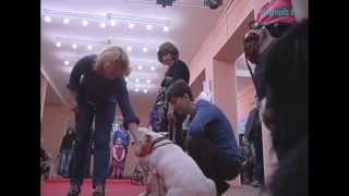 В Петербурге протестировали собак-терапевтов