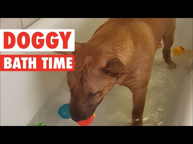Doggy Bathtime || Rubber Ducky Patrol