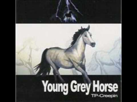 Young Grey Horse - Chips In