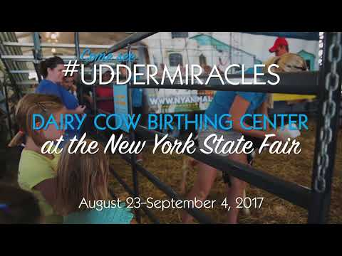 Dairy Cow Birthing Center at the NY State Fair
