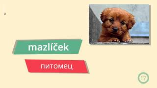 9. Лекция Rodina a dům – Семья и дом. Чешский язык с GoStudy.