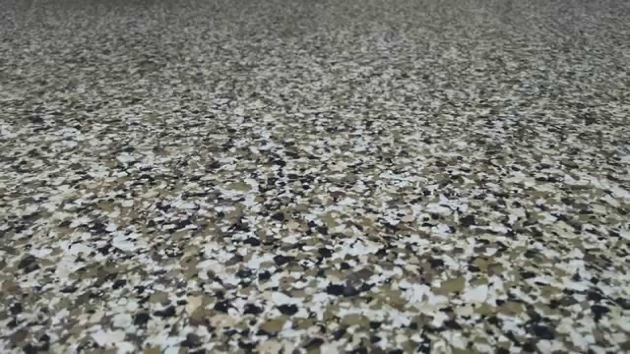 Epoxy Coating Contractor Orlando Garage Floor Flakes