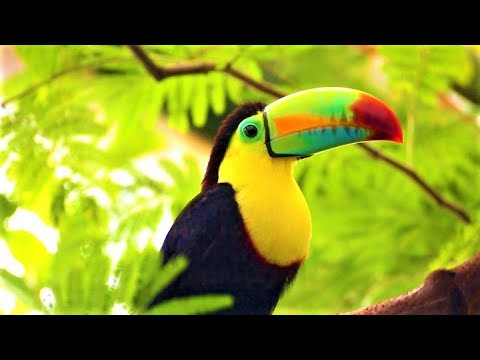 🐦🌴 EXOTIC BIRDSONG - Birds Sound In Jungle - Tropical Forest - Nature , Parrot , Toucan , Amazonia