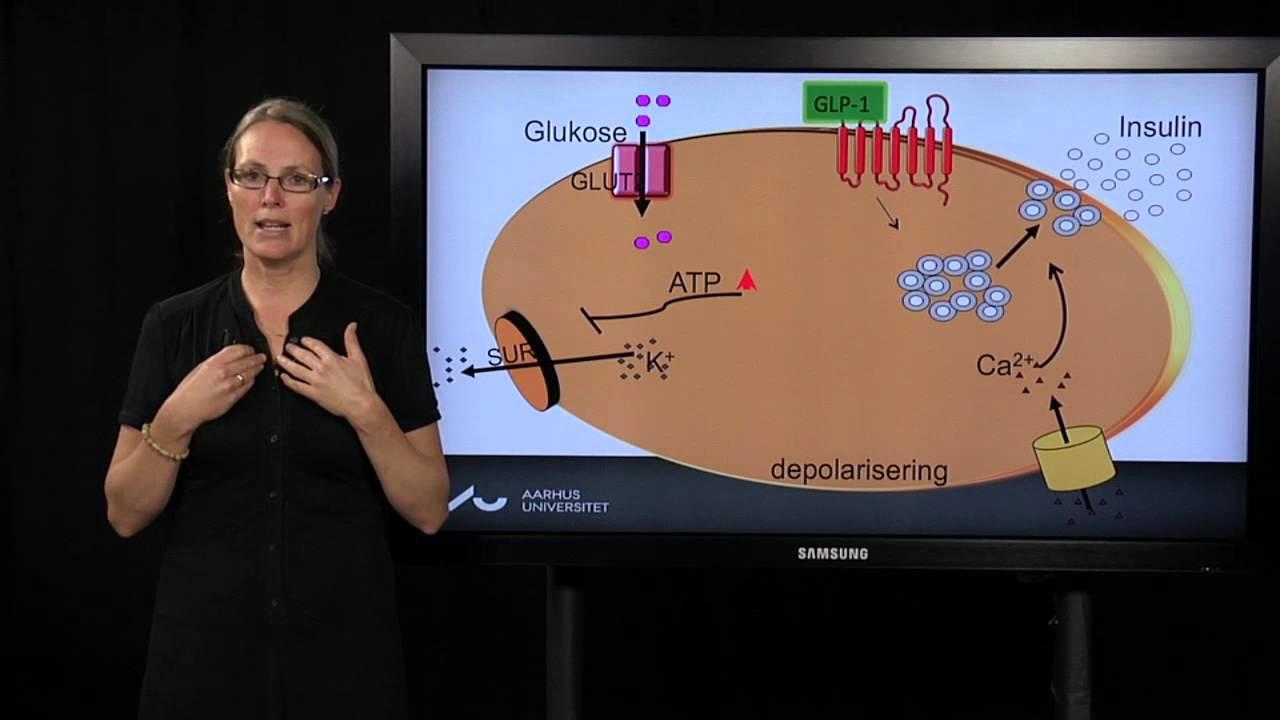 insulinproduktion i kroppen