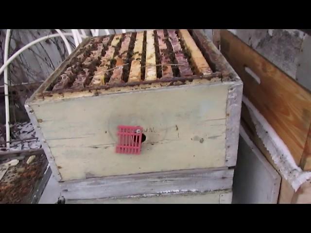 теплая зима 2019 - 2020, и зимовка пчел - если проблема с зимовкой, значит неправильная технология