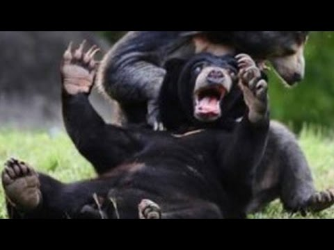 Wild animals can be even funnier than pets - Funny wild animals compilation