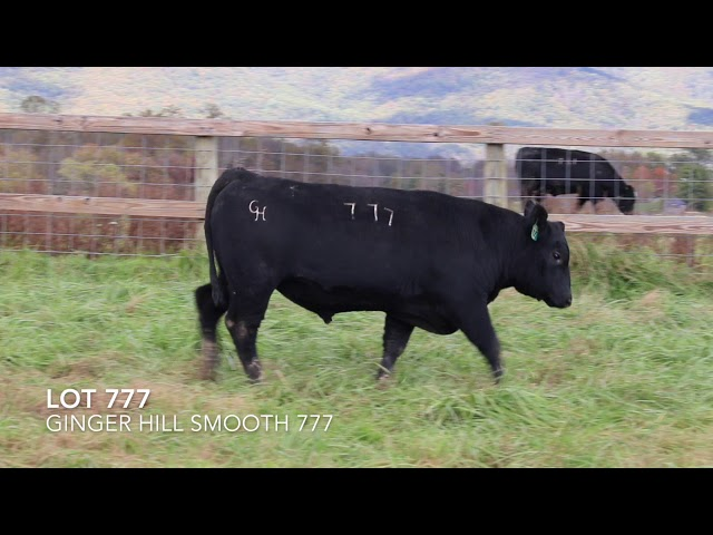 Ginger Hill Angus Lot 777