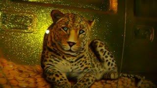 Золотой HUMMER Флейки и АЭРОГРАФИЯ(, 2014-12-18T20:06:47.000Z)