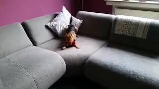 HundeausMallorcade  BIBO