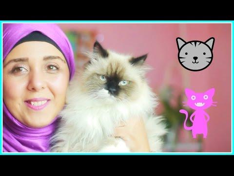 تربية القطط | العناية بالقطط | كل ماتريد معرفته