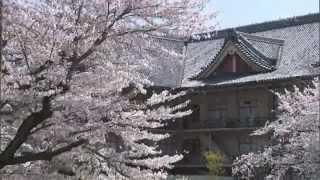 第06回 桜舞う・・・