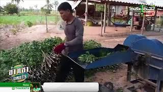 บดมันสำปะหลังเป็นอาหารสัตว์ | 20-03-61 | ข่าวเช้าไทยรัฐ