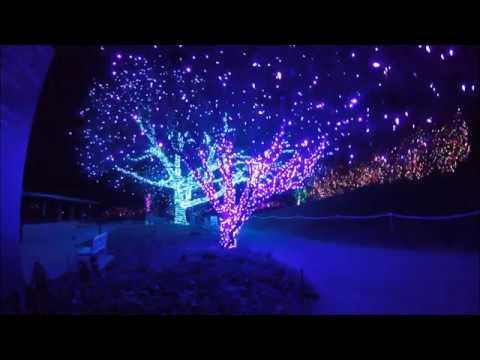 2017 12 05 Denver Botanical Gardens Blossoms Of Light Youtube