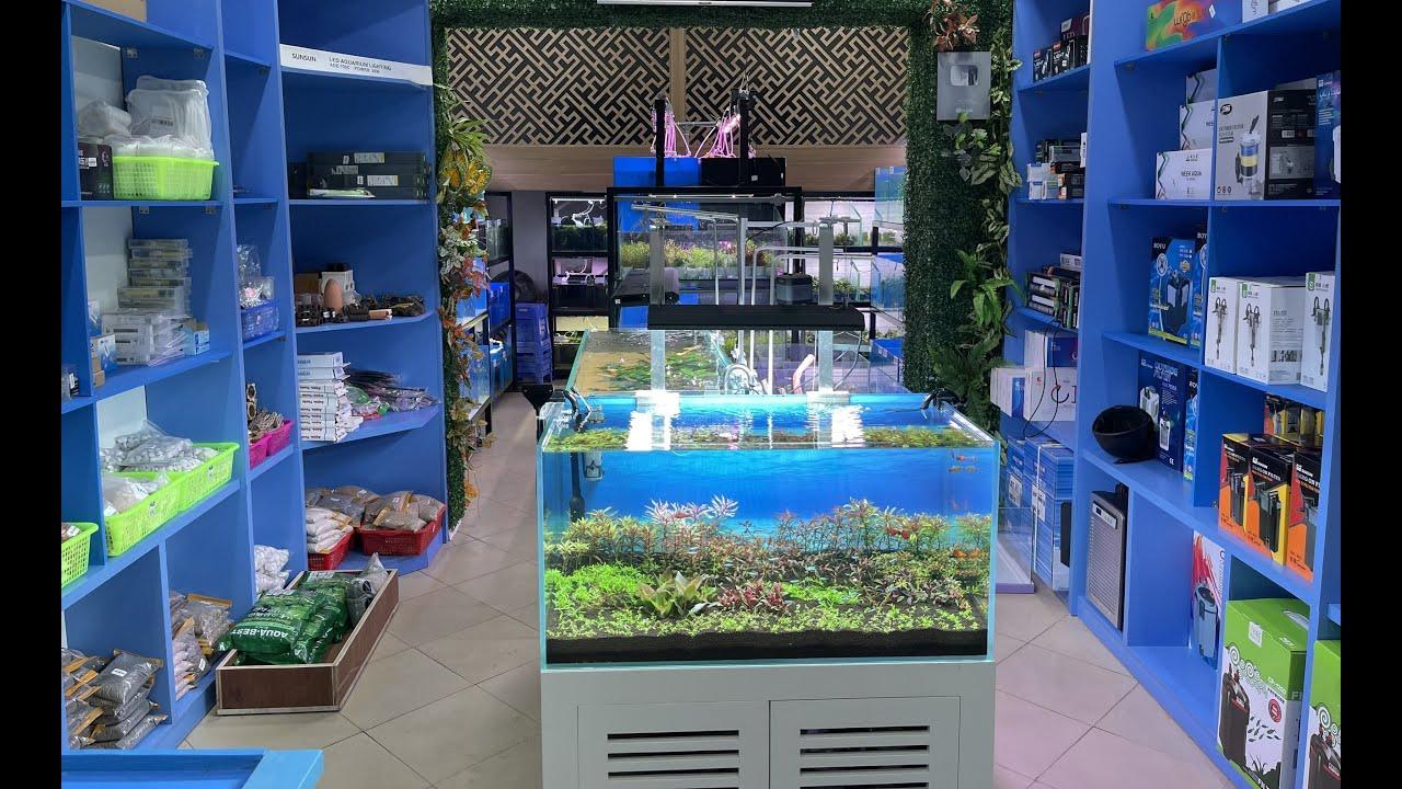 Cùng thăm quan cửa hàng thủy sinh cá cảnh mới của Thủy Sinh Tím tại Hà Nội