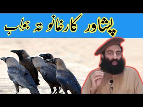 Mufti Mohammed Munir shakir sahib zabardast bayan