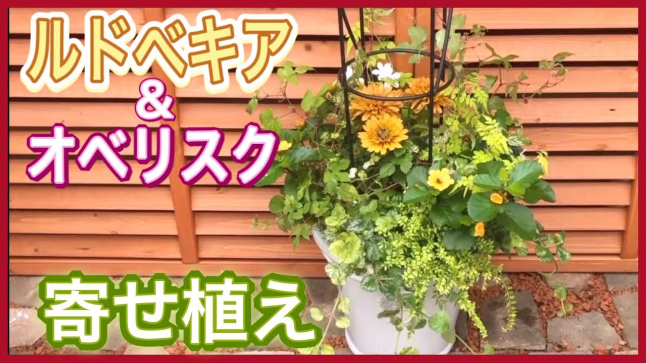 【寄せ植え】ルドベキア☆RHSオリジナル釉薬鉢を使用したオベリスクの立体的なコンテナガーデン!〜ASMR風植え込み