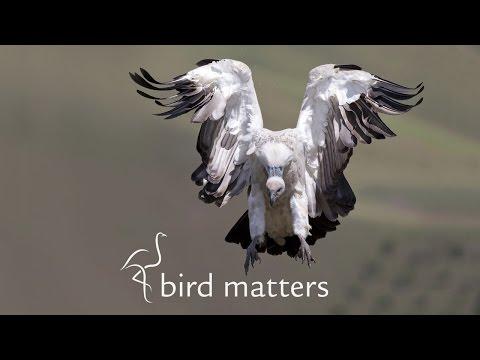 Creative Photography: Unique Compositions & Crops.  Prelena Soma Owen & Bird Matters