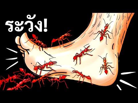 แมลงและสัตว์เล็ก 14 ชนิดสุดอันตรายใต้ฝ่าเท้าเรา