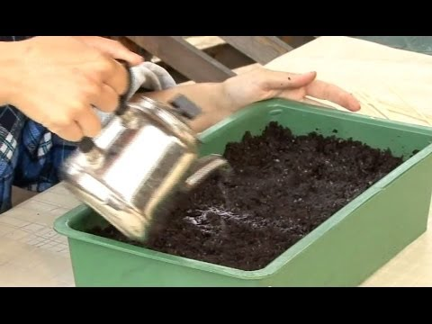 видео: Все о выращивании капусты. Посев капусты на рассаду.Часть 2