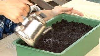 Все о выращивании капусты. Посев капусты на рассаду.Часть 2