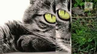 Красивые кошки! Самые красивые и смешные породы кошек