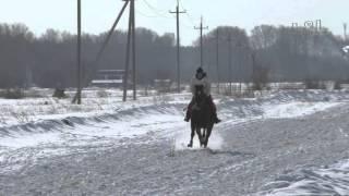 Скачка - беспородные лошади Шушенское 2016 (Horse–Animal-racing-конь-смотреть-онлайн-бега)