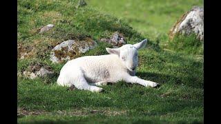 Podstawowe pojęcia w hodowli owiec i kóz