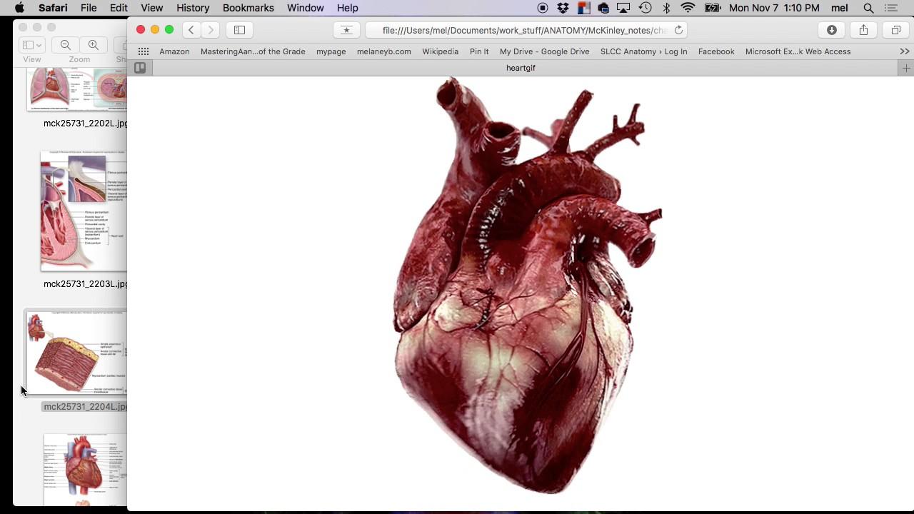 Fall 2016 Heart Anatomy 2 Youtube
